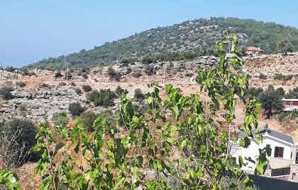 450 SQM LAND for SALE – Ölüdeniz faralya Kirme area
